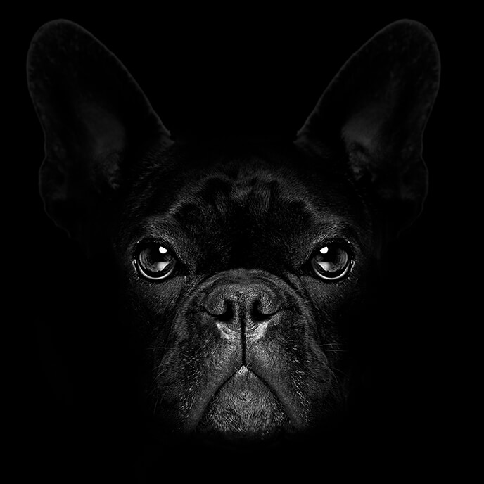 Black dog 1 - Strata Plan